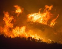 Unprecedented Wildfires Absolutely Ravaging The Planet