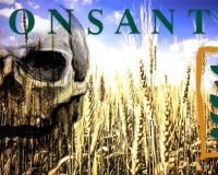 Internal Documents:  Monsanto Knew For Years Their Products Damaged Farms