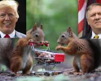 Globalist Squirrels Looking For American Nuts