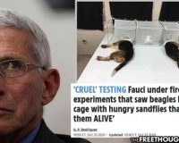 Fauci's Puppy Torture Scandal Has United Political Opposition & May Be The Final Nail In His Coffin