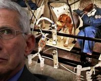 As PETA Calls For Fauci Resignation, He Gets Exposed For A Decade Of Torturing & Murdering Dogs