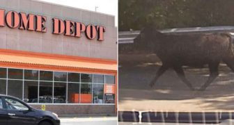 "Connecticut:  Cow's Throat Slit ""In Accordance With Islamic Law"" In Home Depot Parking Lot"